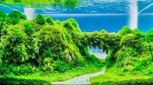 best aquarium plant fertilizers 2020