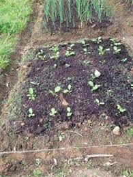 soil to fill raised beds university
