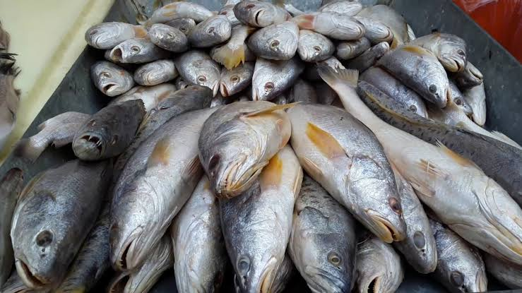 """Image result for fish in market"""""""