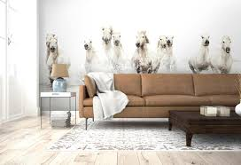 wallpaper and wall murals