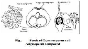 atophytes gymnos