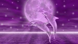 dolphin wallpapers free best hd wallpaper