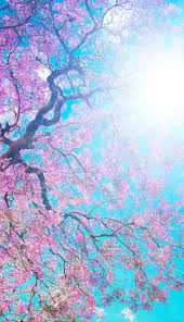 زهور الربيع خلفيات ايفون بلس Iphone 6 Plus 7 Plus صور خلفيات