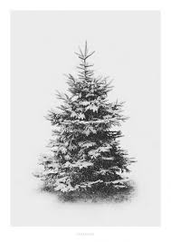 Pin by addie ryan on Weihnachten | Fresh christmas trees, Christmas  wallpaper, Snow covered trees