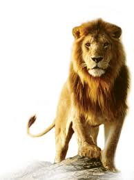 png lion head hd wallpaper 69600