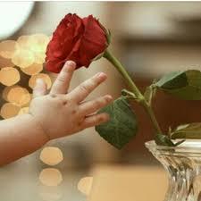 اجمل صور الورد اجمل صور الورد و اشكاله الرائعة رمزيات