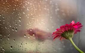 beautiful rain wallpaper 62 images
