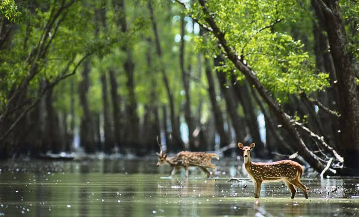 Image result for sundarbans mangrove forest""