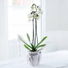 orchids lilies hydrangea plants