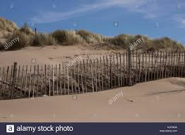 Line Of Pine Trees Lined Up Behind Wooden Fence At Formby Beach To Stock Photo Alamy
