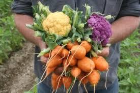 vegetables the california garden web