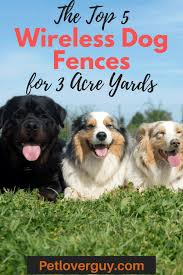 The Top 10 Wireless Dog Fences For Large Acreage And 3 Acre Yards Pet Lover Guy