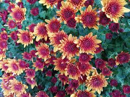 petal autumn botany flora