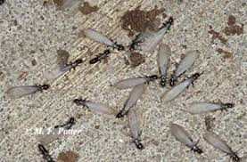 View Anti Termite Treatment Meaning Pictures