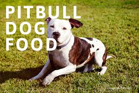 15 top dog foods for pitbulls in 2020