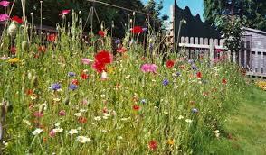 wildflower turf how to create a