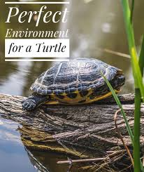 Creating The Perfect Environment For A Pond Turtle Help Your Pond