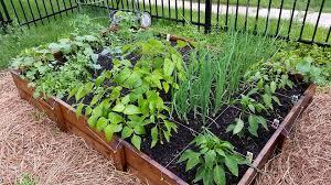 square foot gardening maximum yield