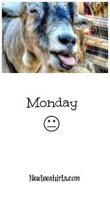 mondays yea they feel like this goat don t let mondays get your