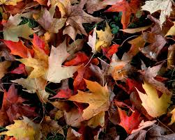 desktop wallpapers group fall leaves