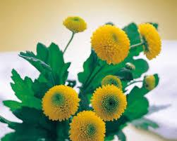 خلفيات زهور جميله 5 D1g