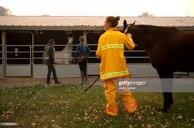 Hillary Hansen, Hillary Merrill and Dr. Emily Putt check on horses... News  Photo - Getty Images