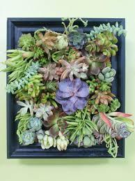 succulent garden shadowbox