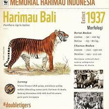 27 September dalam Sejarah: Harimau Bali Dinyatakan Punah
