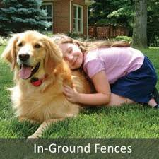 A Underground Pet Fencing Inc Illinois Dog Fence Dealer Store