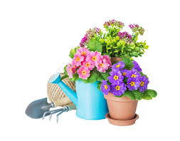 potted flower watering can and garden