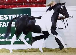 The Mane Show - Class 4 - Youngstock - Sponsored by JAMArt... | Facebook
