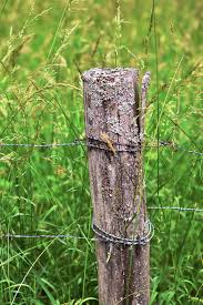 Wood Pile Barbed Wire Fence Meadow Grasses Pasture Fence Post Wooden Posts Post Wire Pxfuel