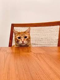 clean pet sns from wood floors