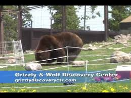 Bear Fence Test Youtube