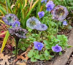 blown glass flowers dee nash s garden