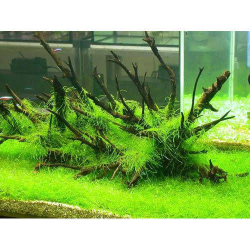 Interesting Facts And Information About The Aquarium Plants