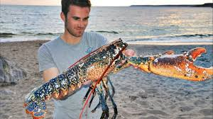 Catching GIANT LOBSTERS by hand and ...