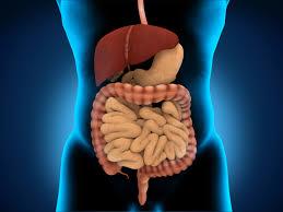 glutamine benefits side effects