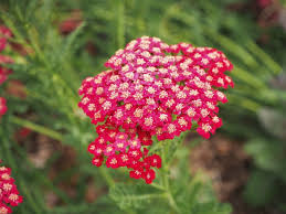 15 perennials that grow in zone 6