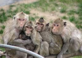 大白課|樹上騎個猴,地上七種猴,你想知道中國七大猴子都是怎麽啪啪啪的麽? - 知乎