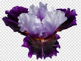 irises flower garden roses desktop