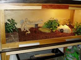 custom ball python enclosure google