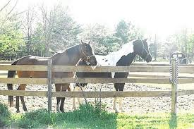 How Building Wooden Horse Fence Animals Mom Com