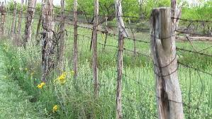 Barbed Wire Wraps Around Cedar Posts Stock Video Footage Dissolve