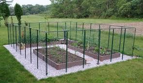 best deer resistant garden ideas