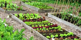 small year round veg patch rocket gardens