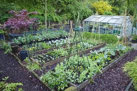 most cost effective vegetables to grow