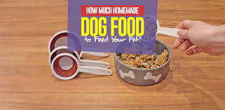 how much homemade dog food to feed my dog