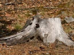 Five Benefits of Tree Stump Removal - Landscape Services
