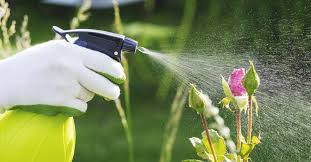 6 easy homemade pesticides that really work